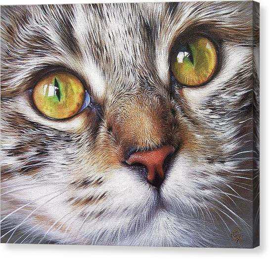 Tabby Look Canvas Print by Elena Kolotusha
