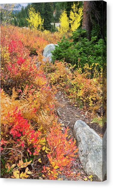 Great Falls Of Yellowstone Canvas Print - Table Mountain Trail In Fall Colors by Mike Cavaroc