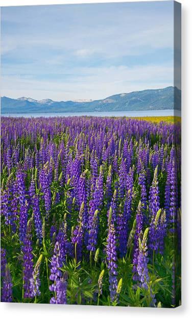 Tahoe In Summer Canvas Print