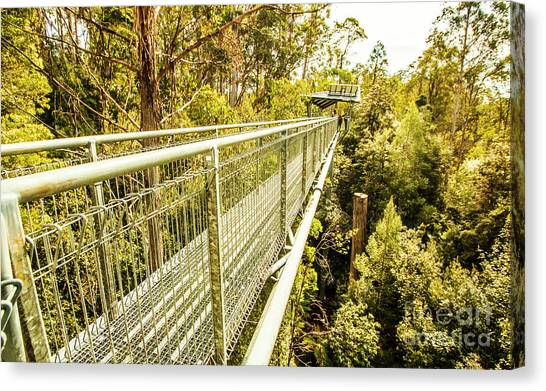 Rainforests Canvas Print - Tahune Airwalk Tasmania by Jorgo Photography - Wall Art Gallery