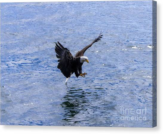 Tail Landing Canvas Print