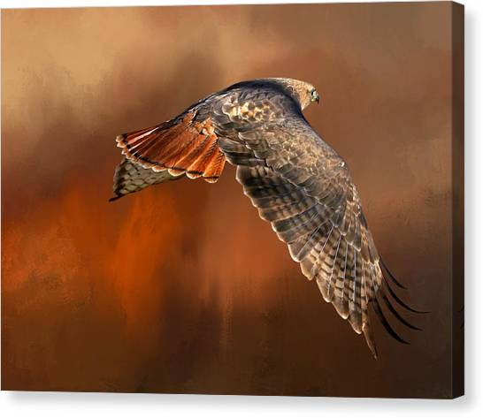 Buzzards Canvas Print - Tail Light On by Donna Kennedy