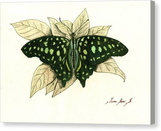 Triangle Canvas Print - Tailed Jay Butterfly by Juan Bosco