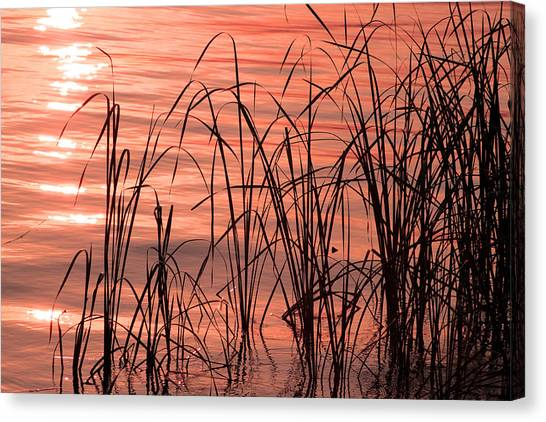 Canvas Print - Tails Of Twilight by Evelyn Patrick