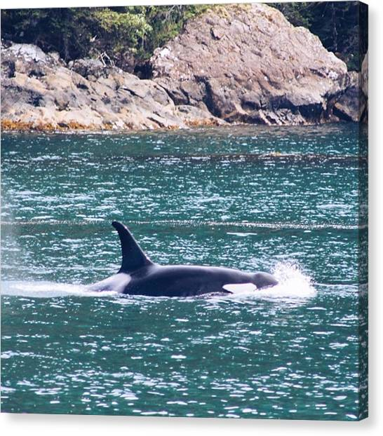 Orcas Canvas Print - Take Me Back To This Very Moment by Kristen Holbrook