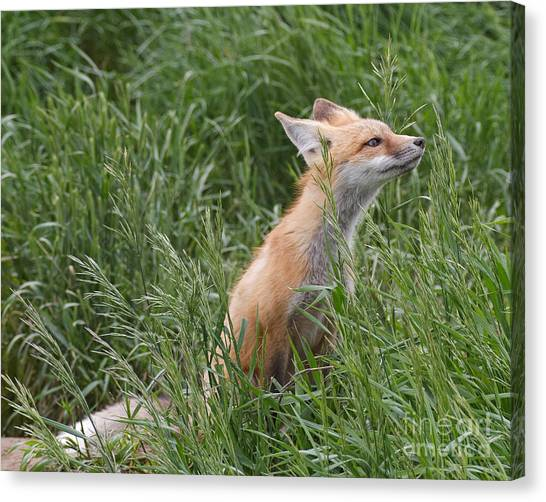 Take Time To Smell The Grasses Canvas Print by Royce Howland