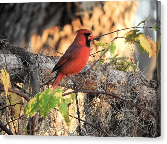 Canvas Print - Taking Pictures Is No Cardinal Sin by Red Cross
