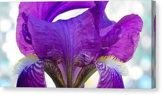 Tall, Bearded And Handsome - Iris Canvas Print