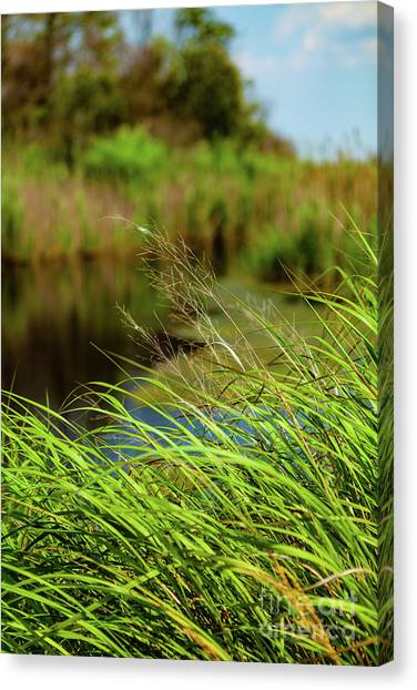 Tall Grass At Boat Dock Canvas Print