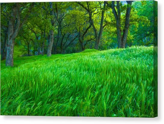 Tall Grass At Twilight Canvas Print