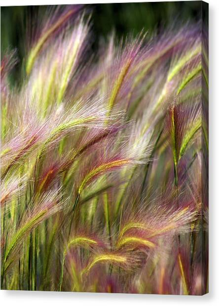 Plants Canvas Print - Tall Grass by Marty Koch
