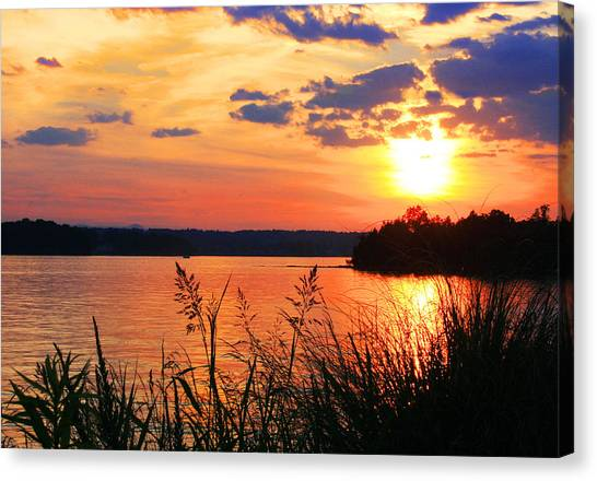 Tall Grass Sunset Smith Mountain Lake Canvas Print