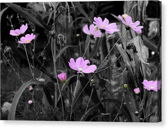 Tall Pink Poppies Canvas Print