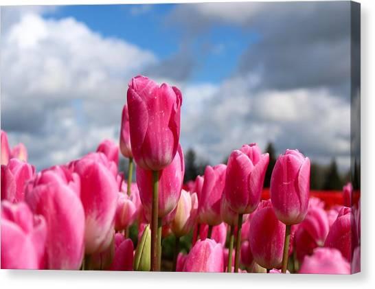 Tall Standing Tulip Canvas Print
