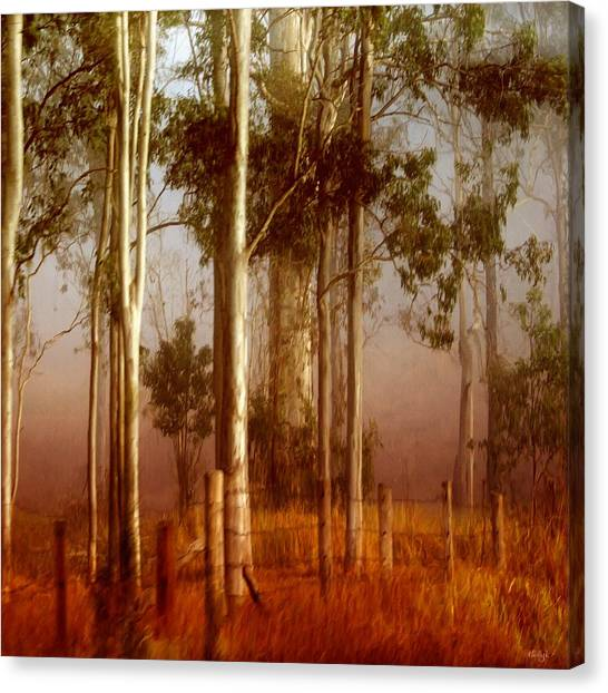 Canvas Print - Tall Timbers by Holly Kempe