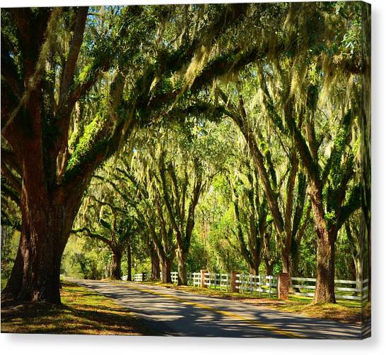 Tallahassee Canopy Road Canvas Print