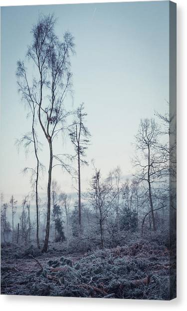 Sherwood Forest Canvas Print - Tallest by Chris Dale