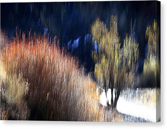 Tame Canvas Print by Robert Shahbazi