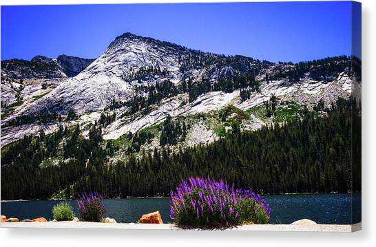 Tanaya Lake Wildflowers Yosemite Canvas Print