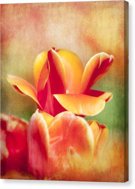 Tangerine Tulip Sorbet Canvas Print