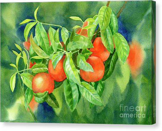 Tangerine Canvas Print - Tangerines With Background 2 by Sharon Freeman