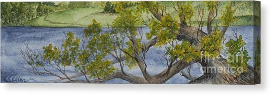Tangled At Lake Cunningham Canvas Print by Kathleen Keller
