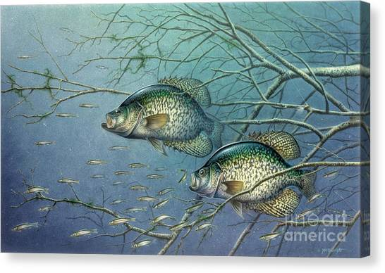Angling Canvas Print - Tangled Cover Crappie II by JQ Licensing