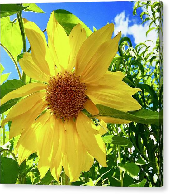 Tangled Sunflower Canvas Print