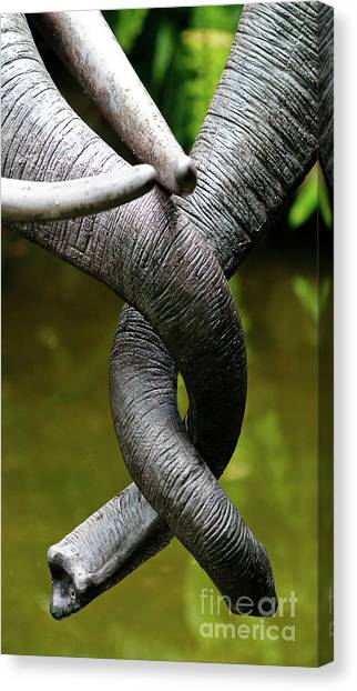 Tangled Trunks Canvas Print