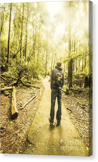 Fallen Tree Canvas Print - Tasmanian Rainforest Tourist by Jorgo Photography - Wall Art Gallery