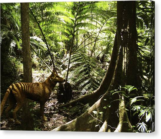 Tasmanian Wolf In Forest Canvas Print by Christian Darkin