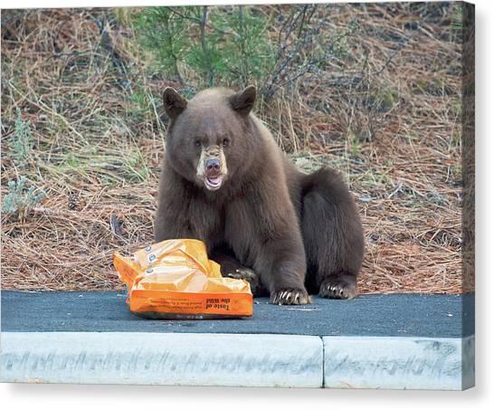 Bear Claws Canvas Print - Taste Of The Wild by Scott Warner