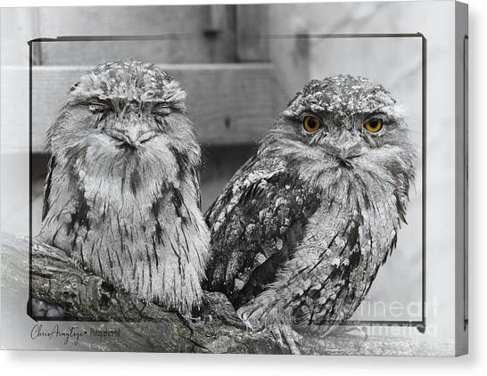 Tawney Frogmouths Canvas Print