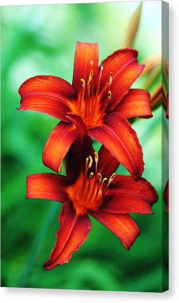 Tawny Beauty Canvas Print