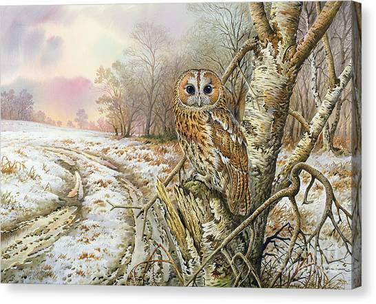 Camouflage Canvas Print - Tawny Owl by Carl Donner