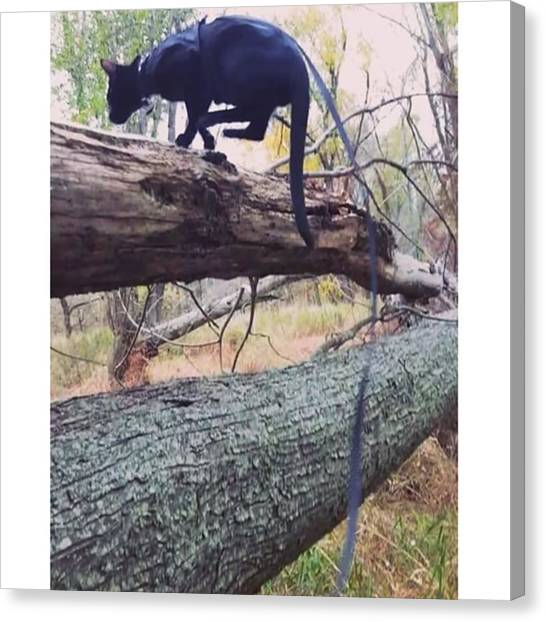 Panthers Canvas Print - #tbt To That Time I Showed Off My by Sirius Black Adventure Cat