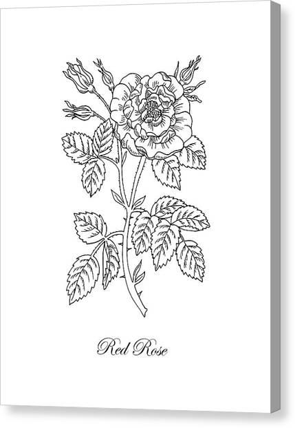 Rose Drawings Canvas Print - Tea Rose Botanical Drawing Black And White by Irina Sztukowski