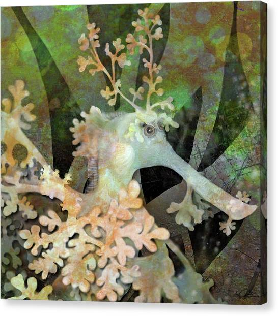 Teal Leafy Sea Dragon Canvas Print