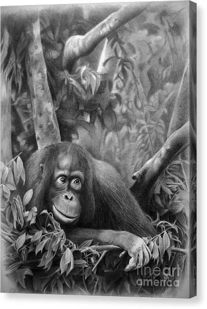 Orangutans Canvas Print - Teenager by Miro Gradinscak