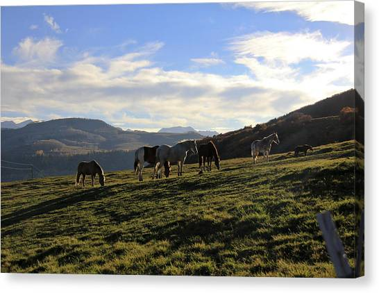 Telluride Mountain Herd Canvas Print
