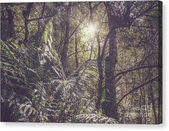 Rain Forest Canvas Print - Temperate Rainforest Canopy by Jorgo Photography - Wall Art Gallery
