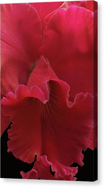 Tender Orchid Canvas Print