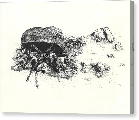 Darkling Beetle Canvas Print