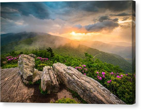 Rhododendron Canvas Print - Tennessee Appalachian Mountains Sunset Scenic Landscape Photography by Dave Allen