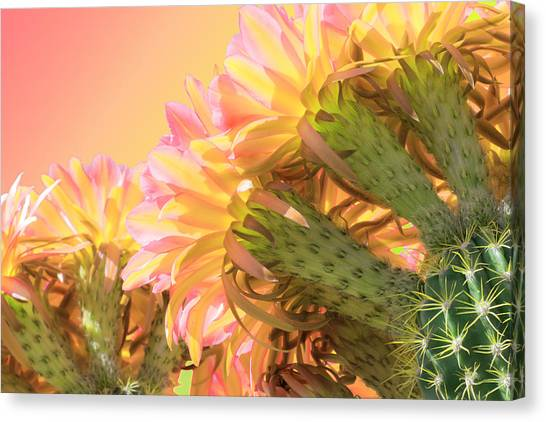 Tequila Sunrise Canvas Print - Tequila Sunrise by Veronika Countryman