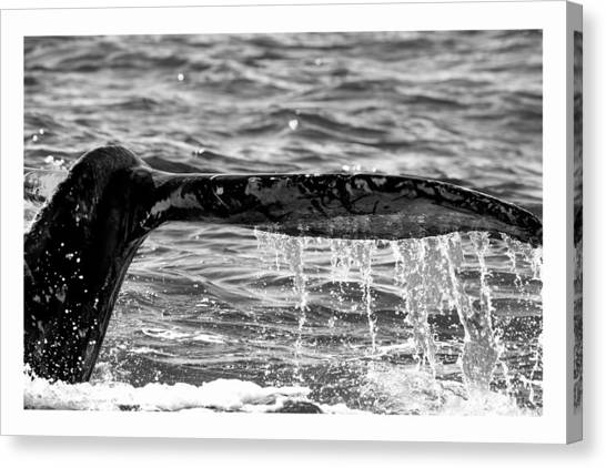 Terminal Dive Canvas Print