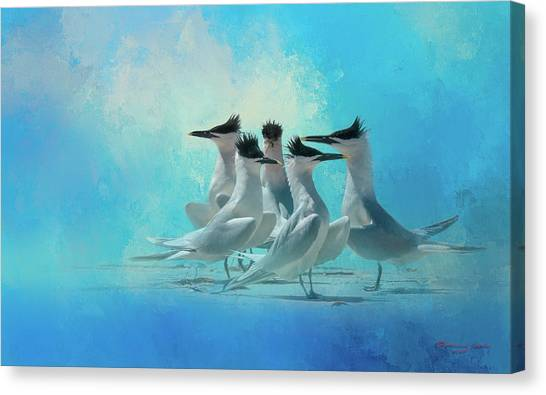 Florida Wildlife Canvas Print - Tern And Look by Marvin Spates