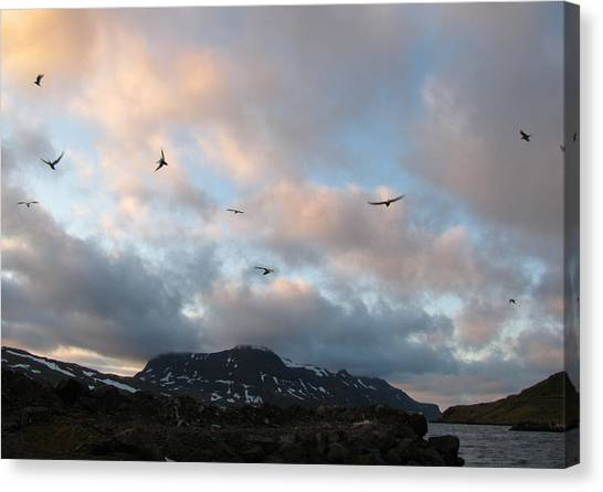 Terns At Midnight Canvas Print by Sidsel Genee