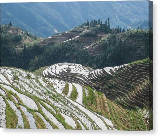 Terrace Fields Scenery In Spring Canvas Print