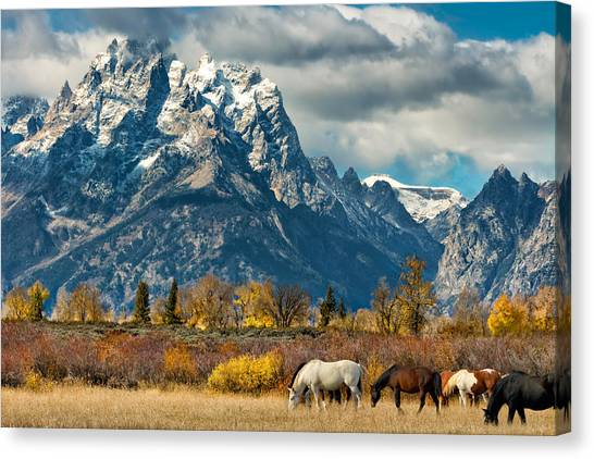 Black Stallion Canvas Print - Teton Horses by Kathleen Bishop